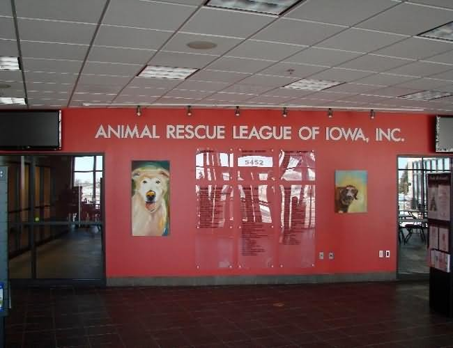 ad-animal-rescue-league-of-iowa-8b70c6db8b