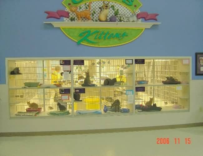 Nebraska Humane Society - Cat Cages and Viewing Area