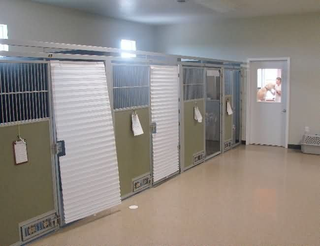 sab-green-acres-kennel2-a8b00be263