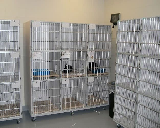 cat-cages1-buddy-center-0f36298427