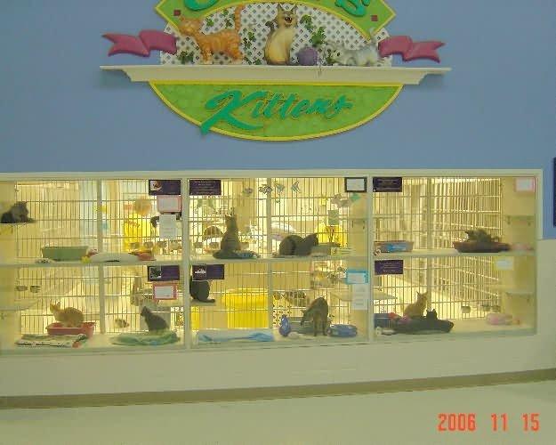 cat-cages1-nebraska-hs-d9e5546ef8