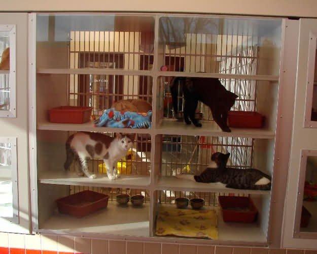 cat-cages2-animal-rescue-iowa-36594b662f