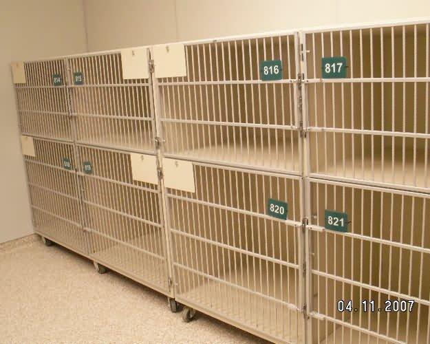 cat-cages2-pueblo-animal-services-559caaf267