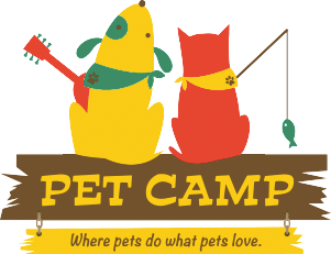 Pet Camp Cat Safari