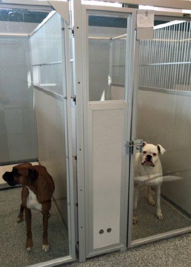 doghousing-1